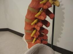 腰椎、腰痛