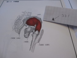 足の付け根の外側(中臀筋)